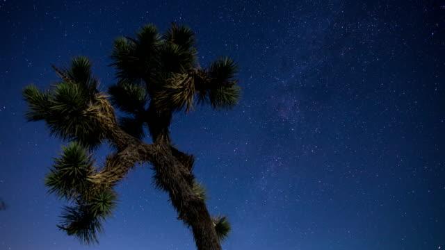 ジョシュアツリーで星空砂漠の夜 - タイムラプス - ジョシュアツリー国立公園点の映像素材/bロール