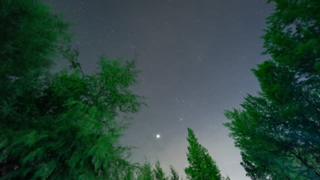 Starry Sky Over Tropical Forest, Time Lapse Video