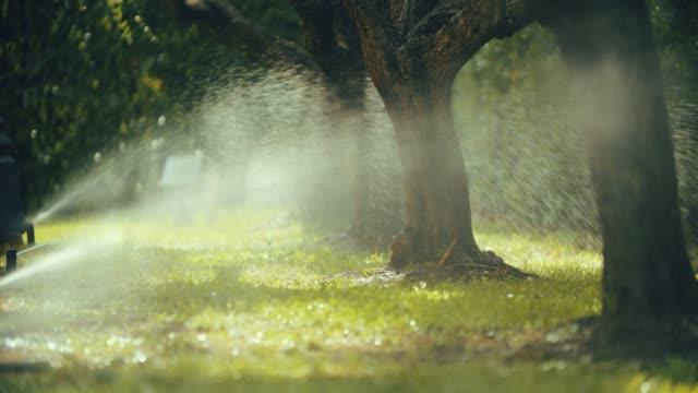 statische aufnahme eines gartenwasserregners, der hellgrünes gras in einem sonnigen garten wässert. in zeitlupe geschossen - bewässerungsanlage stock-videos und b-roll-filmmaterial