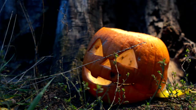 Static shot of a terrible rotten pumpkin covered with mold near an old wooden stump is lit by a bright light that moves in different directions. Closeup of a jack-o-lantern lying in the grass cooked for Halloween video