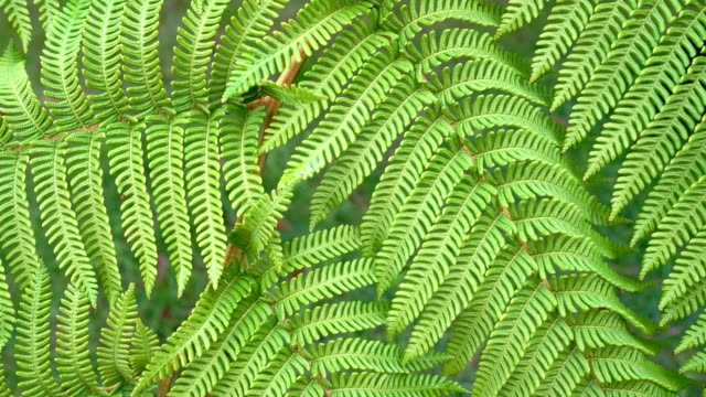 4k static video of green fern leaves moving under weak breeze - jungle filmów i materiałów b-roll