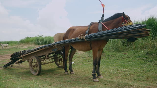 Stationary horse cart loaded with steel rods ( close up) video