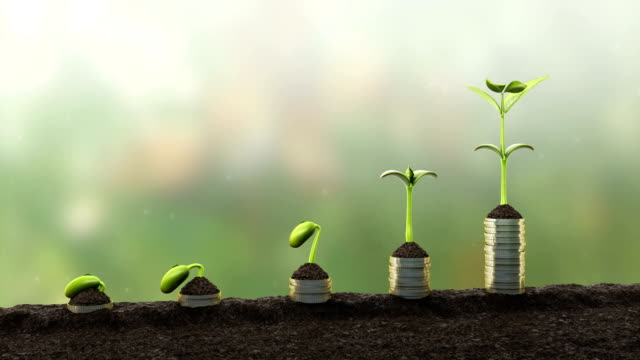 Statistics concept.Growing financial charts Seedling growing 4K.