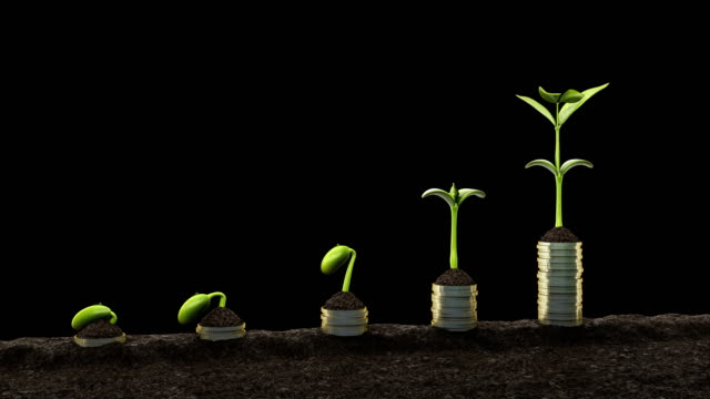 Statistics concept.Growing financial charts Seedling growing. germinating bean 4K.
