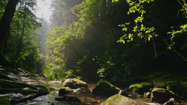 steadicam shot: clean mountain stream in the mysterious morning forest. the rays of the sun make their way through the branches of trees - rivulet 4k stock videos and b-roll footage