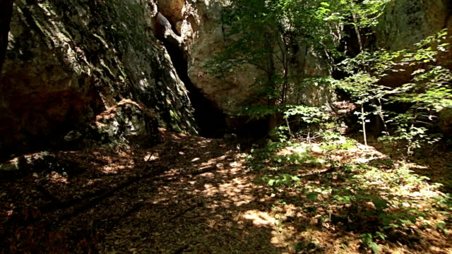 Steady cam shot, walking on track to old Unesco tomb in the forest video