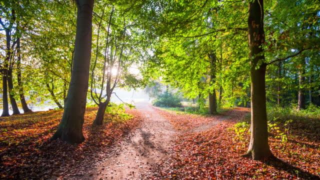 Steadycam: Path trough autumn forest.