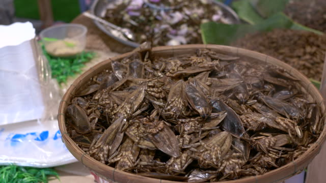 Steam insect, Thailand Traditional food video