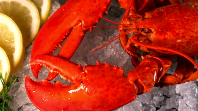 steamed lobster seafood on ice - crostaceo video stock e b–roll