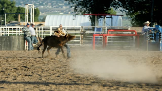 steer wrestling rodeo - wrestling stock videos and b-roll footage