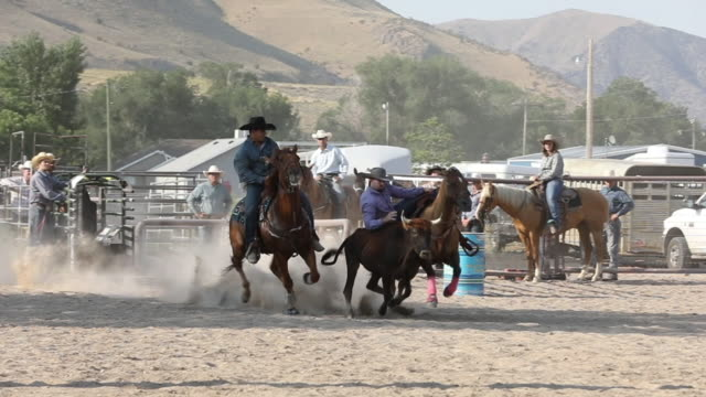 steer wrestling slow motion - rodeo stock videos and b-roll footage
