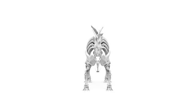 Stegosaurus Skeleton Rotating on White Background Full HD