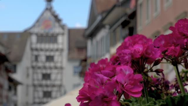 Stein am Stein am Rhein flowers and  lower gate Stein am Rhein lower gate and flowers- rack focus from flowers to clock tower . bay window stock videos & royalty-free footage