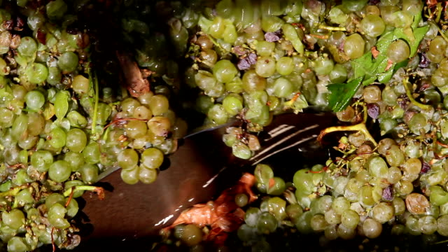Stemmer crusher crushing grapes at a winery video