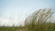 istock Steppe grasshopper in the wind against the sky. Average plan. Slow motion 1251767531