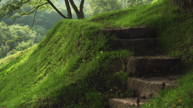 Steps of an old stone staircase in a forest on a hill with green grass and trees.