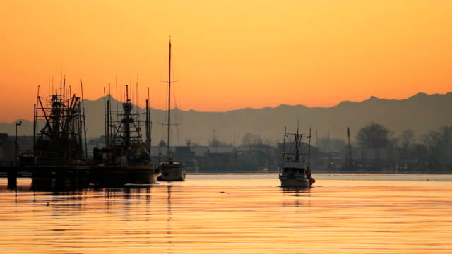 steveston porto commerciale di barca di pesce all'alba - fiume fraser video stock e b–roll