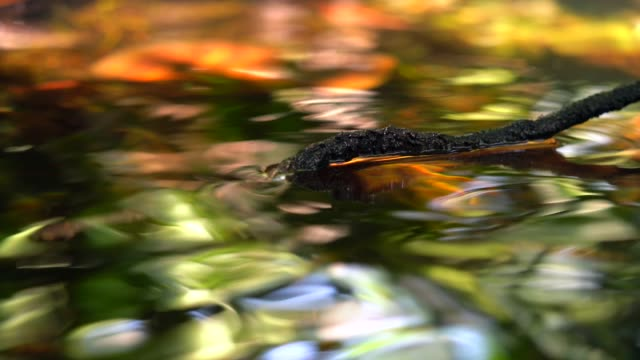 stick swaying in colorful river reflection video