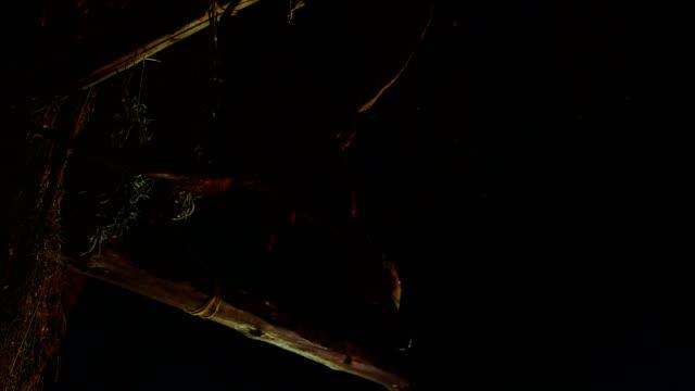 Still Life: Goose Hanging Upside Down 2 video