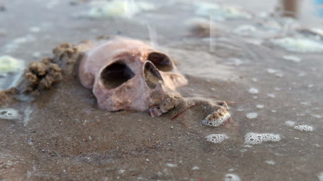 Still Life ,Human Skull on the Sand Beach Still Life ,Human Skull on the Sand Beach animal skeleton stock videos & royalty-free footage