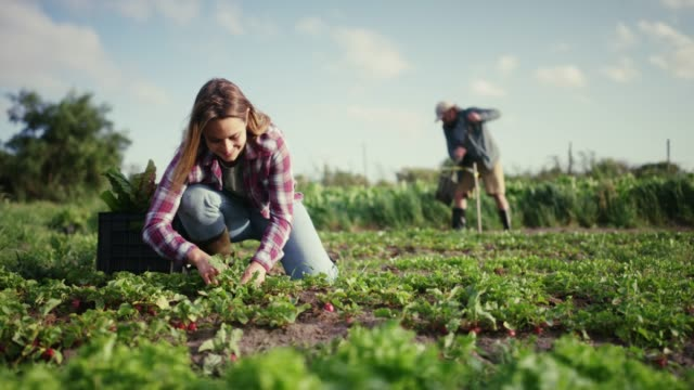 Stock your pantry with fresh produce 4k video footage of an attractive young woman working on her farm with a male colleague in the background agricultural occupation stock videos & royalty-free footage