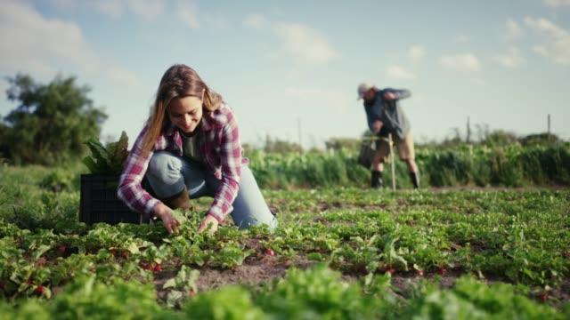 lagerför ditt skafferi med färska råvaror - bonde jordbruksyrke bildbanksvideor och videomaterial från bakom kulisserna