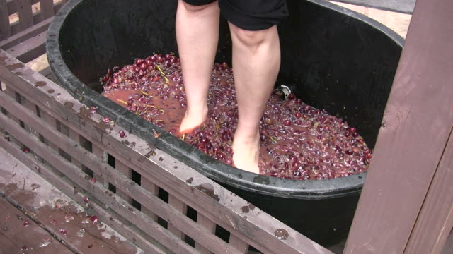 Stomping Grapes Making wine stamping feet stock videos & royalty-free footage