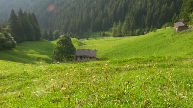 Stone Cottages in a Wild Alpine Valley and Forest in Italy video
