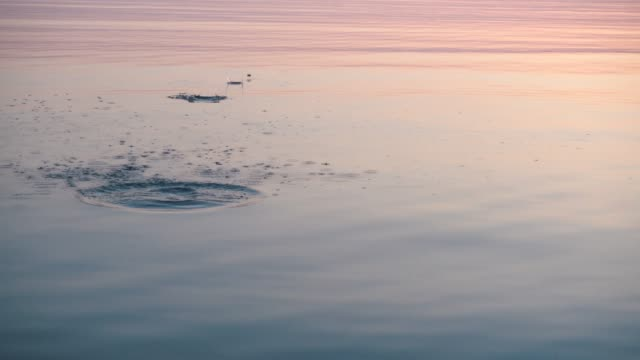 stone skipping on beautiful calm water, majestic sunrise around. - pietra roccia video stock e b–roll