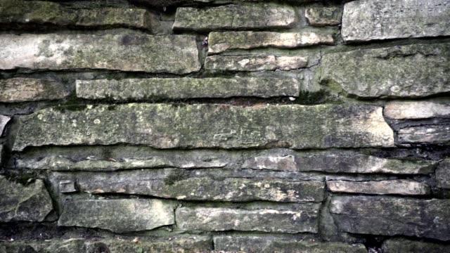 石壁の背景。石垣テクスチャのドリーショット - 石垣点の映像素材/bロール