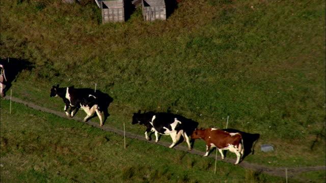 石垣ファームと牛 - 空中写真 - ニューハンプシャー州チェシャー郡、アメリカ合衆国 - ウシ点の映像素材/bロール