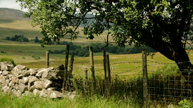 Stonewall, fence and tree amongst fields with hillside in background video