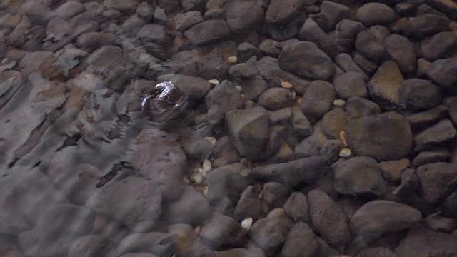 стоуни фон под водой в замедленном темпе 120fps - камень стоковые видео и кадры b-roll