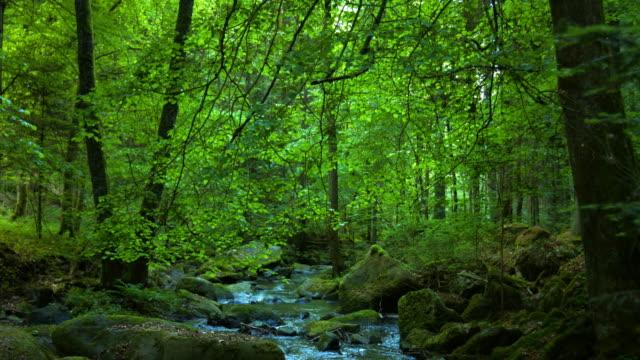 Stony Stream In Spring Forest – film