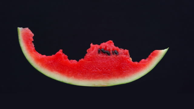 stop motion, Eating slice of watermelon  isolated on black background stop motion, Eating slice of watermelon  isolated on black background watermelon stock videos & royalty-free footage