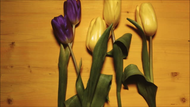 stop motion tulips on a yellow background animation - cinque oggetti video stock e b–roll