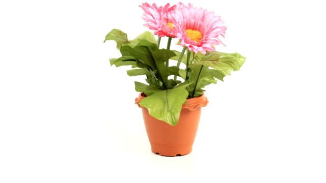 stopmotion of plastic flowers video