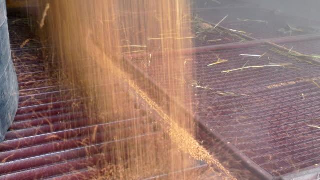 storage of cereals after harvest - завод по переработке пищевых продуктов стоковые видео и кадры b-roll