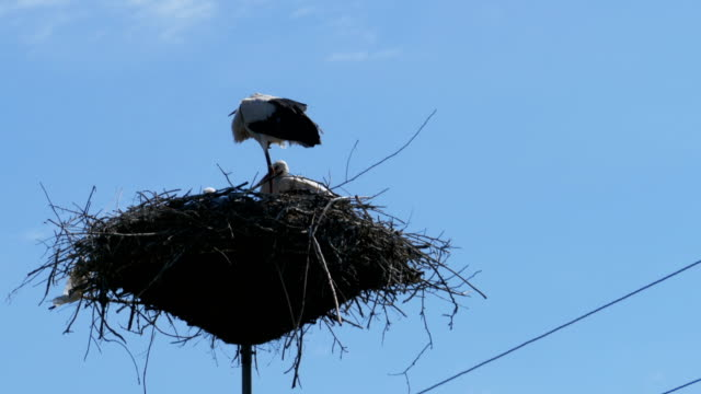 Stork in a Nest on a Pillar High Voltage Power Lines on Sky Background video