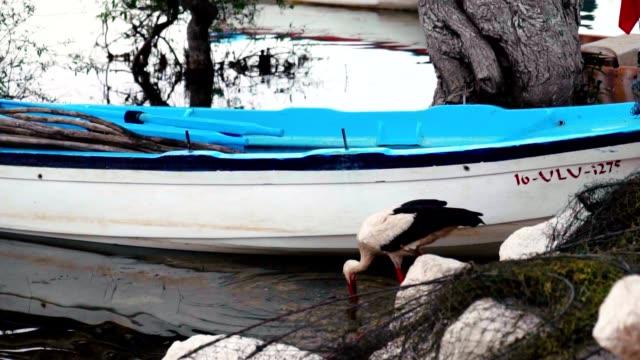 Stork is Fishing
