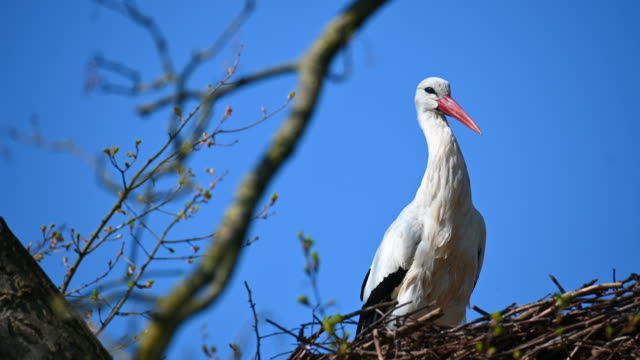 A stork is waiting for the partner in its nest