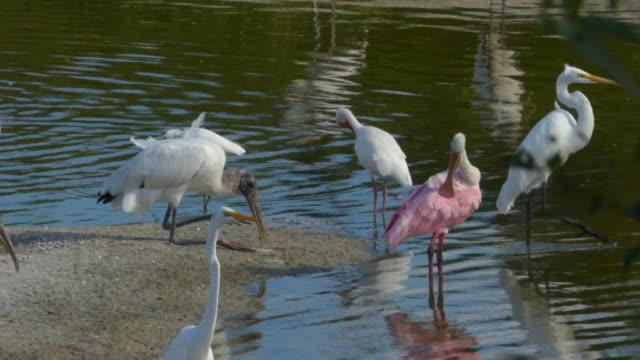 Stork Sits Down
