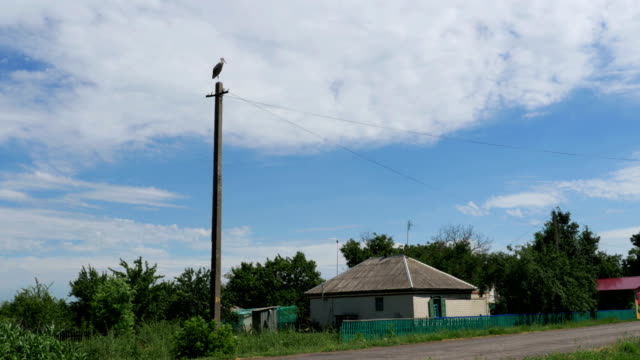 Stork Sits on a Pole in the Village and Moving Clouds video