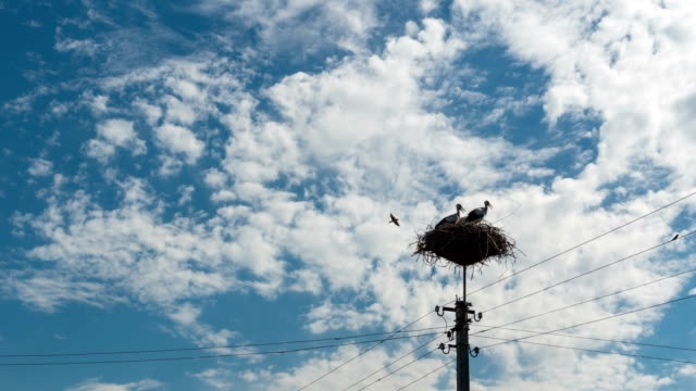 Storks Sitting in a Nest on a Pillar and Moving Clouds in a Blue Sky. Time Lapse video