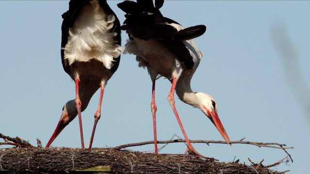 Storks video