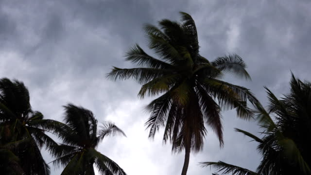 4k: storm blowing coconut palm trees. - uragano video stock e b–roll