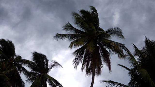 4k: sturm weht kokosnuss-palmen. - jahreszeit stock-videos und b-roll-filmmaterial