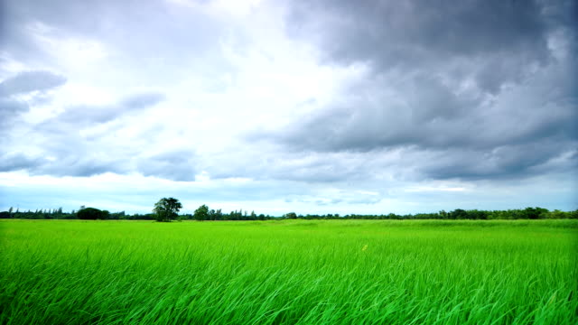 Storm clouds motion over field green. video