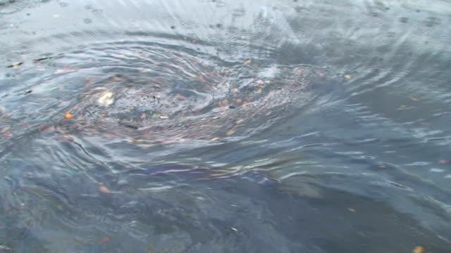 Storm Drain Whirlpool video