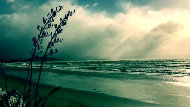 Stormy Clouds roll in on a Windy New Zealand/ Aotearoa Seascape with Harakeke video